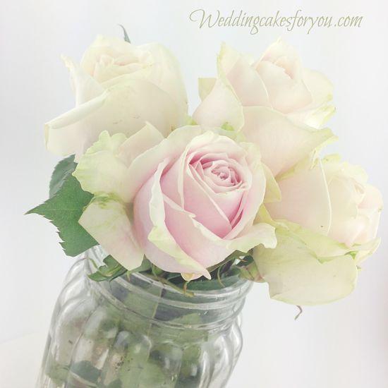 Blushing Pink Roses
