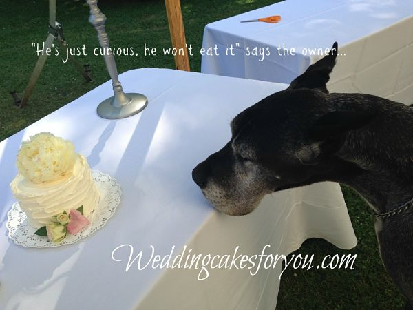 dog looking at cake